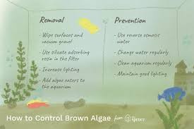 How to Remove Brown Algae From Your <b>Aquarium</b>