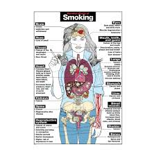 the harmful effects of smoking essay   essay for you    the harmful effects of smoking essay   image