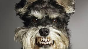 Image result for growl dog