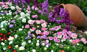 نتیجه تصویری برای گل های رنگارنگ در گلدان