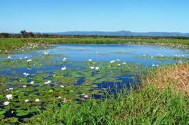 Image result for wetlands