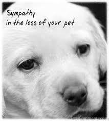Loss Of Your Pet - DesiComments.com via Relatably.com