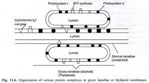 essay on photosynthesis in plants absorption and utilisation of light energy by photosynthetic pigments