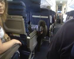 The first time I've felt worse for the service dog than I have the ... via Relatably.com