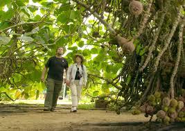 <b>Tropical Fruit Farm</b>