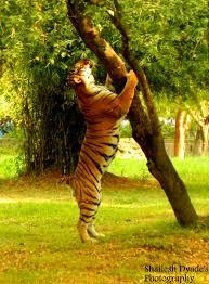 paramahansa com a to zoo an essay by priyanka a vith a to zoo an essay by priyanka a vith standard