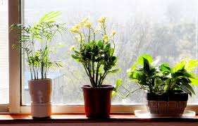 cute best bedroom plants on bedroom with feng shui q amp a plants in the charming bedroom feng shui