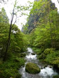 Image result for pictures of hiking trails with streams