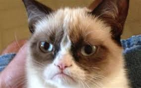 Grumpy Cat, the movie, to premiere at Christmas - Telegraph via Relatably.com