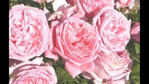 L'OCCITANE Rose 4 Reines hand <b>cream</b> – Видео Dailymotion
