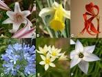 family amaryllidaceae