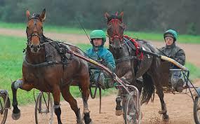 """Résultat de recherche d'images pour """"les images des chevaux de course"""""""