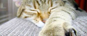 6 недорогих <b>когтеточек</b> для кошек — подборка в Журнале Маркета