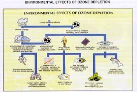 ozone layer depletion   causes  effects and solutionseffect of ozone depletion on environment