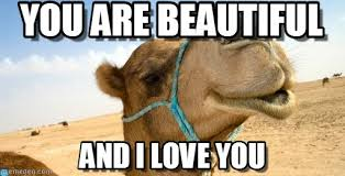 You Are Beautiful - Compliment Camel meme on Memegen via Relatably.com