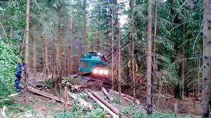 Tracked Harvester - Neuson Ecotec 242 HVT in thick forest - YouTube