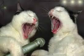Meme Creator - Cat Scratch Fever!!! Meme Generator at MemeCreator.org! via Relatably.com