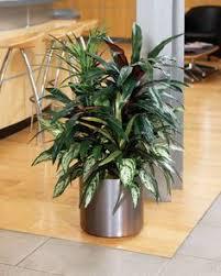 largeartificialplantsforindoors up your decor artificial plants for office decor