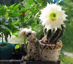 Výsledok vyhľadávania obrázkov  pre dopyt fotky kaktusy
