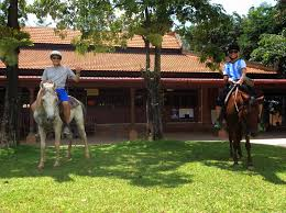 the happy ranch horse farm phu quoc island tours the happy ranch horse farm offers countryside trail rides from one hour to half a day