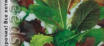 <b>Салат листовой</b> Бейби Ливз Цветной, <b>Смесь</b>, 3 г Вкуснятина ...