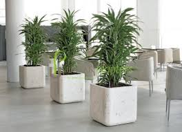 office plants interior landscaping tropical office plants live artificial plant displays artificial plants for office decor