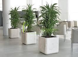 Office Plants Interior Landscaping Tropical Live U0026amp Artificial Plant Displays  L