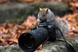 Resultado de imagem para Dia mundial do fotógrafo