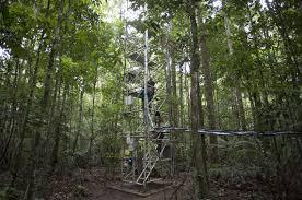 save amazon rainforest essay  endangered extinct species save amazon rainforest essay