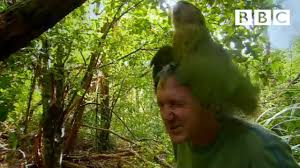 Shagged by a rare <b>parrot</b> | Last Chance To See - BBC - YouTube