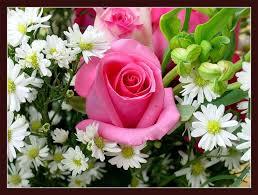 鮮花的圖片搜尋結果