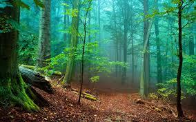Resultado de imagem para forest beautiful