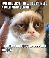 "The Best Of ""Pissed Off Cat"" - 18 Pics 