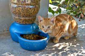 u s department of defense photo essay a cat pauses over a bowl of food under a covered area where wounded warriors informally