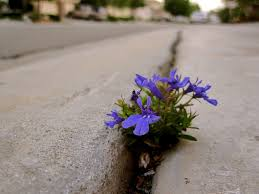 Image result for creative commons flower on sidewalk