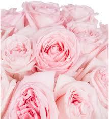 <b>Букет</b>-<b>соло</b> ароматных роз Pink OHara (15,25,35,51 или75 ...