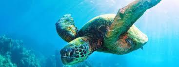 Sea Turtle | Species | WWF