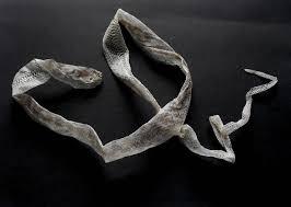 Image result for snake skin