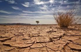 Image result for famine