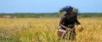 Risultati immagini per sovranità alimentare