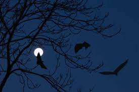 Image result for scary bats