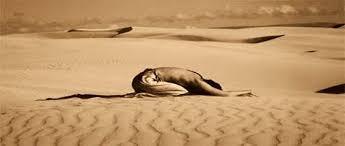 Resultado de imagen de fotos de desiertos
