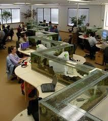 office aquarium doubles as desk divider twistedsifter office desk aquarium