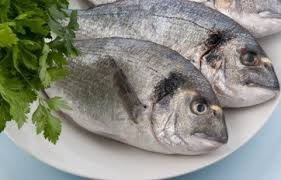 Image result for pics of fish diet