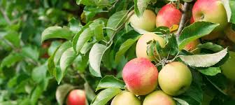 ХОРУС® – системный <b>фунгицид</b> для профилактики растений от ...