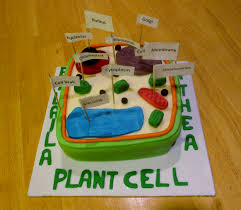 plant cell biology homework magpie biology biology homework