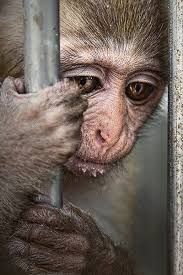 Image result for caged animals