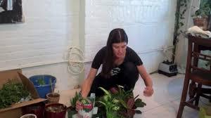 how to green your home part 2 build a mason jar herb garden youtube build diy mason
