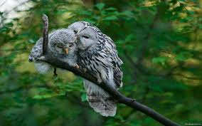 Image result for owl and baby