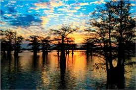 Image result for caddo lake
